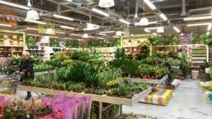 Садовый центр «Дарвин» уже в третий раз открывает свой магазин совместно с нашей компанией
